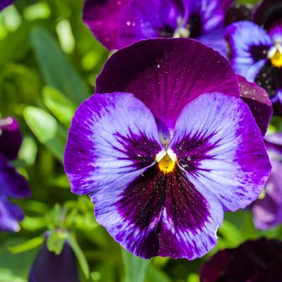 Plantas Ornamentales Y Jardines